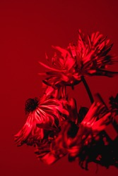 Monochromatic closeup of plant shot in red light