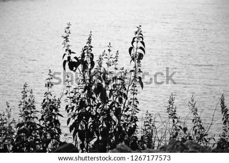 Monochromatic small plants wallpaper  #1267177573