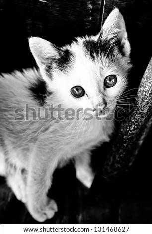 Monochrome cat looking