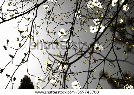 "monochrome flowers/""Monochrome Flowers"""