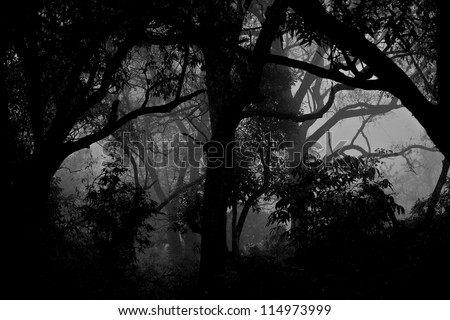 Monochrome Forest Silhouette