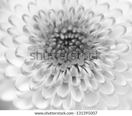 Monochrome macro close up shot of flower head