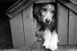 Monochrome portrait of a very sad and lonely dog