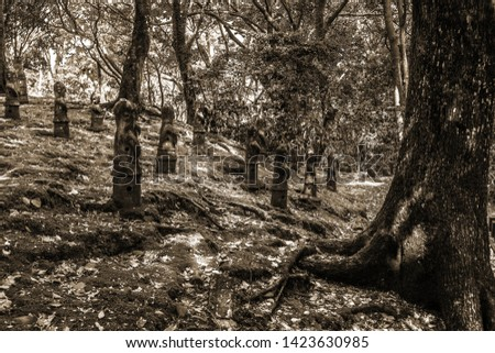 Monochrome sepia picture who depicts several japanese wooden idols in a mystical forest.
