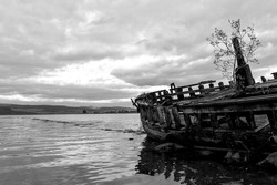 Monochrome wooden ship wreck with stern pointing forlornly out into the water with a solitary tree growing out of the deck