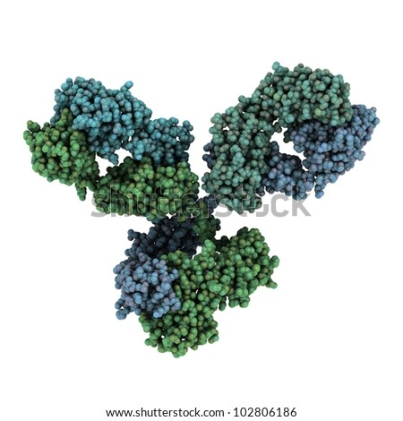 Monoclonal antibody (Immunoglobulin G, IgG1, mAb) molecule, chemical structure. Most current biotech drugs are monoclonal antibodies.
