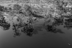 Monotone aerial towards the banks of a lagoon studded with trees, algae and water reflections