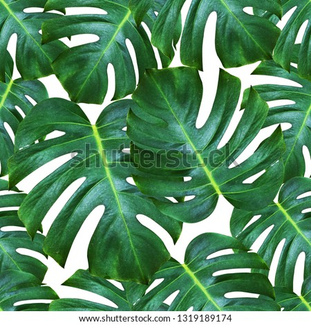 Monstera deliciosa plant pattern background