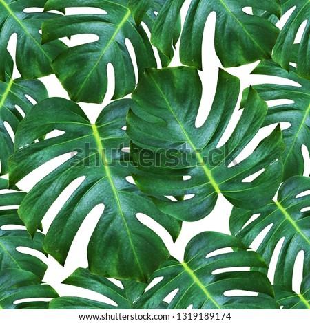 Monstera deliciosa plant pattern background