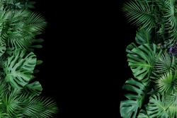 Monstera, fern, and palm leaves tropical foliage plant bush nature frame on black background.