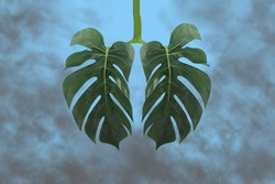 Monstera leaf as lungs shape,surrounded by gray toxic smoke,CO2.Ecology concept of air pollution,harm to human body and environment from smoking,home planting as protection against smog.Copy space