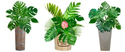 monstera leaves pattern set with vase for nature concept ,tropical green leaf isolated on white background