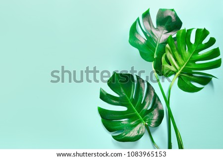 Monstera leaves summer minimal background with a space for a text, flat lay, view from above - Shutterstock ID 1083965153