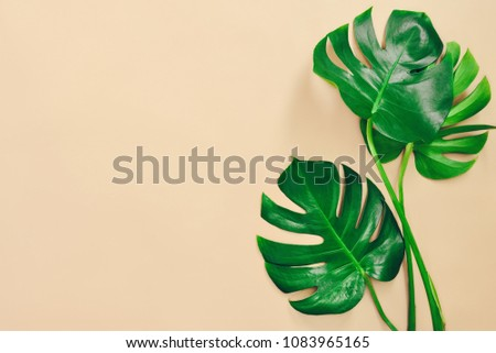 Monstera leaves summer minimal background with a space for a text, flat lay, view from above - Shutterstock ID 1083965165