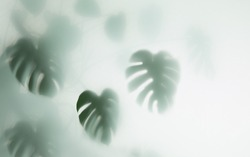monstera palm in fog, selective focus