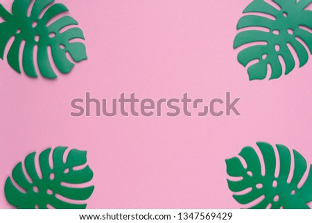 Monstera plant background. Monstera leaves on coral color background. Summer minimal concept. Space for text