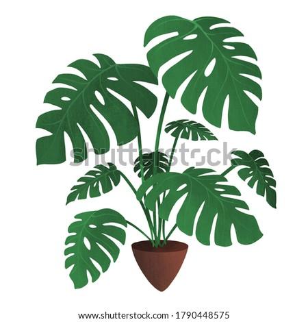 Monstera - plants series illustration Foto stock ©