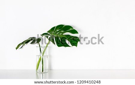 Monstera tropical palm leaves in a glass vase standing on white table, front view, space for a text #1209410248
