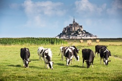 Mont Saint Michel bay listed as UNESCO World Heritage, cow in pasture and Mont Saint Michel in the background