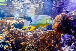 MONTE CARLO, MONACO: The Exhibits inside the Oceanographic Museum or Musee Oceanographique - a museum of marine sciences in Monaco Ville in Monaco