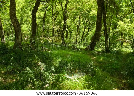 Montenegrian forest - stock photo