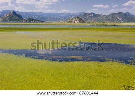 Montenegro, green beauty swamp on Skadarsko lake. Balkans