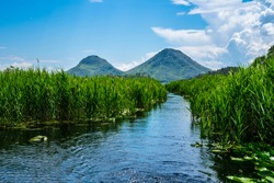 Montenegro, Way through green reed and lily fields on surface of skadar lake water surrounded by high mountains in national park scenery