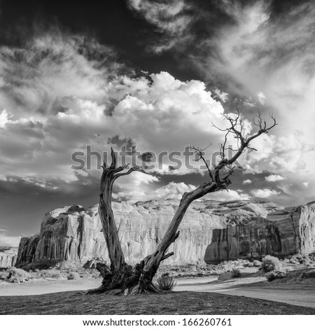 Monument Valley Juniper Tree and Mesa