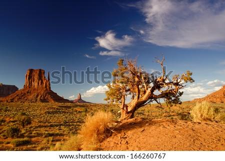 Monument Valley Lone Juniper and West Mitten.