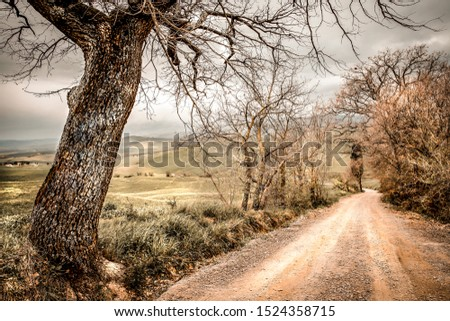 Mood fall photo of Tuscany landscape and free space for your decoration.  #1524358715