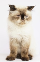 Moody cat from shelter unwilling to pose for camera
