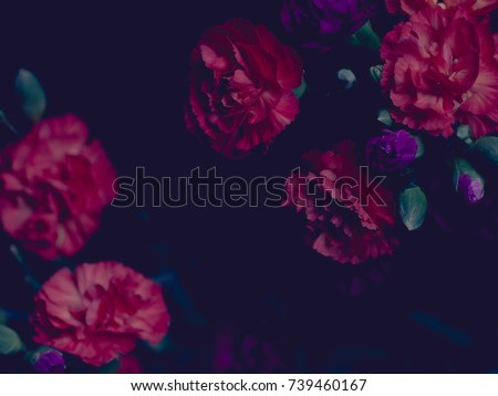 Moody chiaroscuro floral arrangement, red and purple carnations, dark background