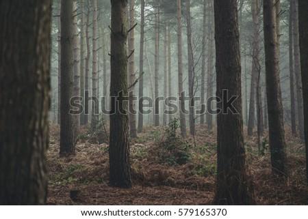 Moody Foggy Woods