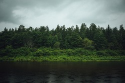 Moody forest with wide river Gauja in Latvia. Rain in forest