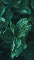Moody Green Leaves