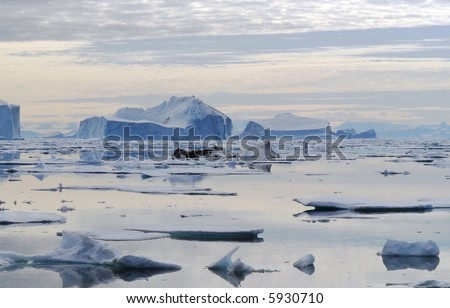 Moody Iceberg Bay - Northeast Greenland National Park