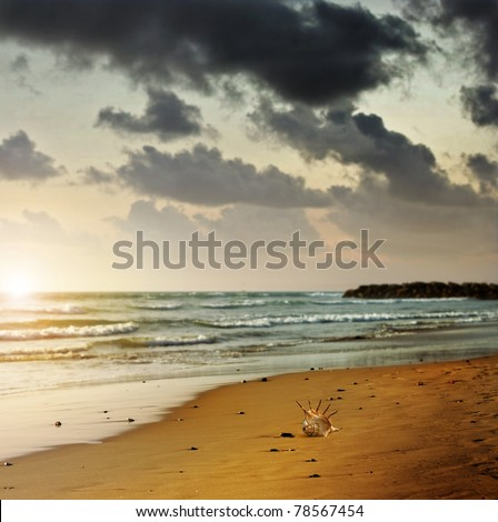 Moody landscape photo of a lonely seashell on beach shoreline with setting sun