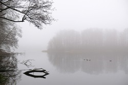 Moody misty landscape of lake with amazing effect of reflection of branches immersed in calm surface of water. A flock of ducks on water. Otomin Lake, Kashubia, Poland
