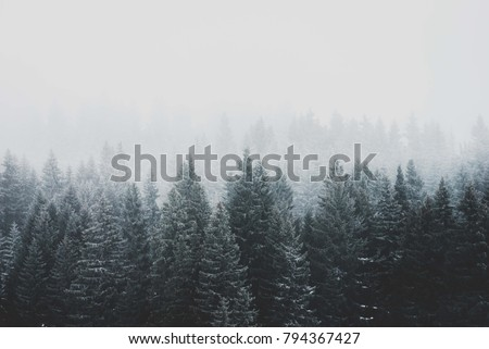 Moody mountain forest trees at early morning with fog. Wood winter conifer trees. Nature mood landscape #794367427