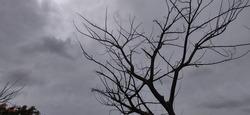 moody shot of a fallen tree