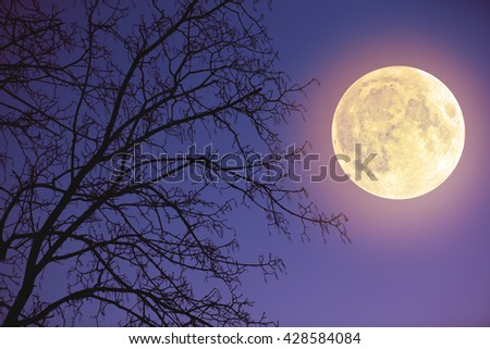 Moon among the clouds on a midnight sky with tree silhouettes. My astronomy work. No elements of NASA or other third party.