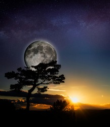 moon and evocative tree