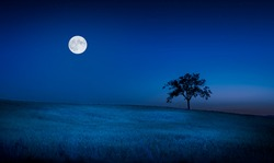 Moon and stars over tuscan meadow and lone tree