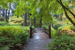 Moon Bridge at Japanese Garden in Portland Oregon autumn season