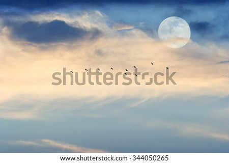 Moon clouds is a daytime cloudscape with a very large full moon rising in the sky and a flock of silhouetted birds flying in the soft blue sky.