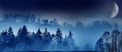 moon fog and a forest