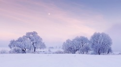 Moon over frosty trees in the winter morning