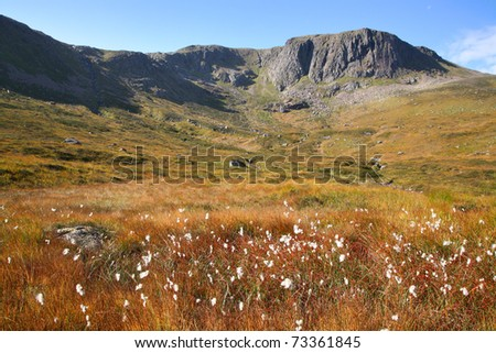 Moor below Loch Etchachan in the Cairngorm mountains of Scotland.