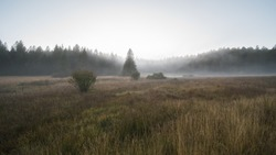 moor landscape in the fog in the landscape protection area The nature reserve Kirchspielwald-Ibacher Moos in southern germany,  is a significant moor area nationwide with numerous endangered animal an