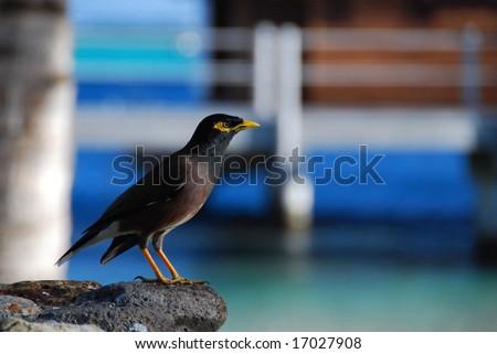 Moorea wildlife